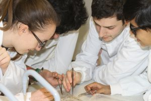 NAA insect sorting (2)