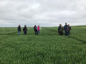 UoN project team with industrial partners assessing crops at field trial site in Lincolnshire