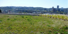 A photograph of a greenroof in Portland, Oregon, visited during the team's interdisciplinary trip to investigate whether Portland is a Blue-Green City