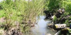 A photograph of the Johnson Creek restoration project, Portland, Oregon