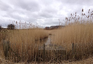 A photograph of a SuDS pond near the Red House Farm estate, Newcastle