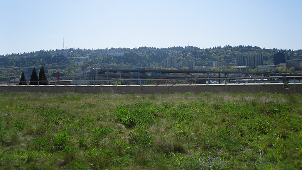 A photograph of the Multnomah County Ecoroof, Portland, Oregon.
