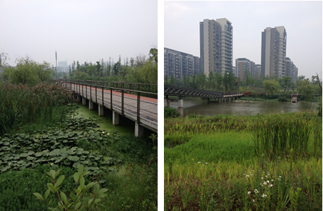 A photograph of the Ningbo Eco-corridor