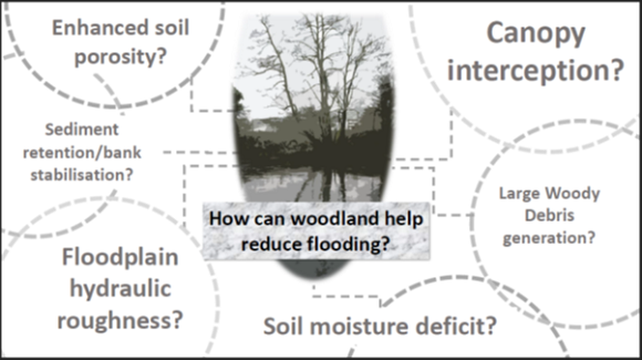 A diagram illustrating examples of how woodlands can reduce flood risk