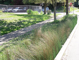 A photograph of a Portland bioswale (without kerb-cut)