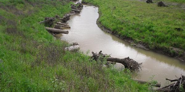 A photograph of Natural Flood Management in Johnson Creek East Lents Floodplain Restoration Site, Portland, Oregon.