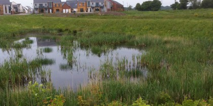 A photograph of one of the Newcastle Great Park SuDS ponds