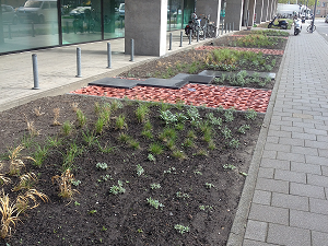 A photograph of permeable paving outside a city centre school
