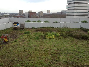 A photograph of DakAkker rooftop farm