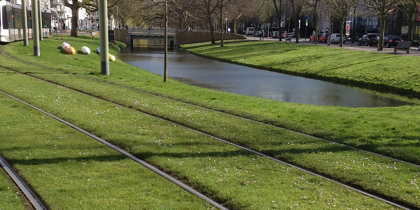 A photograph of green tram tracks in Rotterdam city centre