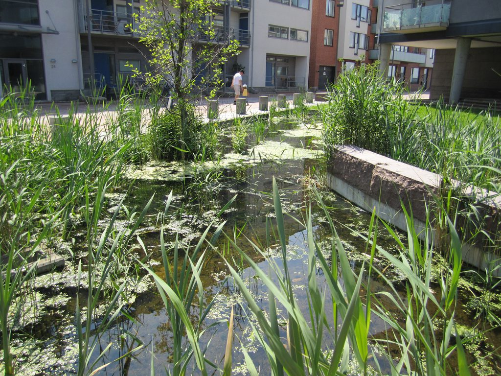 Conservation pond with reeds adjacent to housing in central Malmo