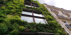 Green wall as an example of multi-functional blue-green infrastructure