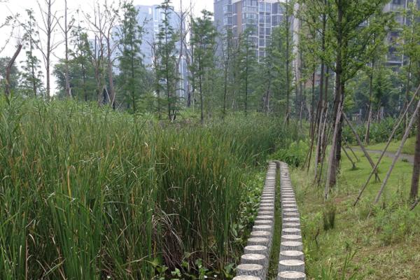 A photograph of Blue-Green space in Ningbo eco-corridor