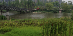 A photograph of the greenspace and river at the Ningbo Eco Corridor, northeast Zhejiang province, People's Republic of China. Photo credit: E. O'Donnell (June 2015).