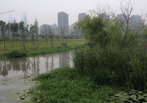 A photograph of the Ningbo Eco-Corridor (photo. E. O'Donnell, June 2015)