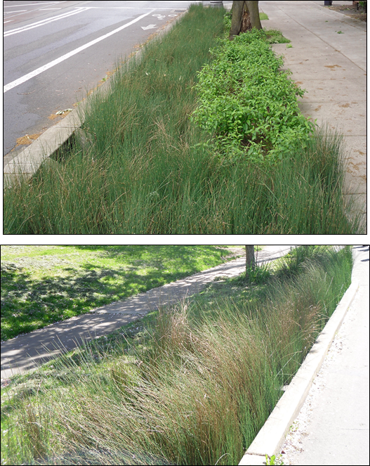 Two photographs of bioswales in Portland, Oregon USA