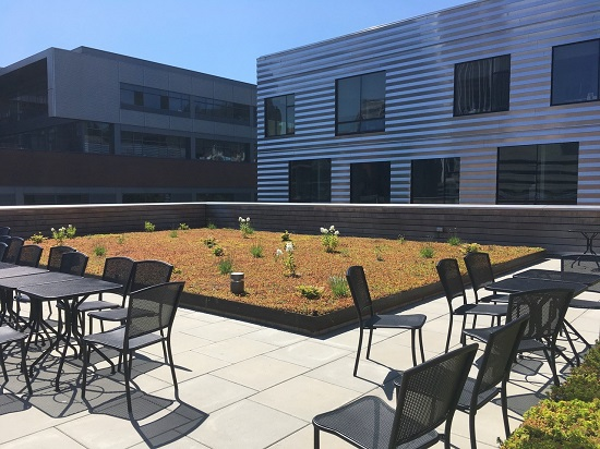 A photograph of the ecoroof on top of the Academic and Student Recreation Center at Portland State University.