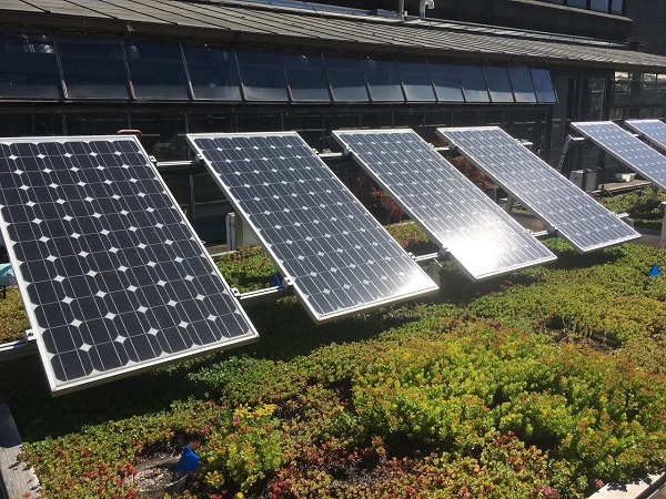 A photograph of solar panels and vegetation on top of the Science Research and Teaching Center at Portland State University.