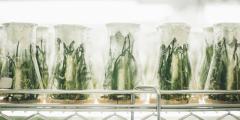 plant sciences to recruitment consultant