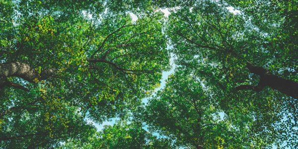 Trees crowns texture in the summer park