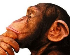 ThinkingChimp_thumb