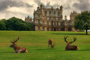Wollaton Hall and deer.