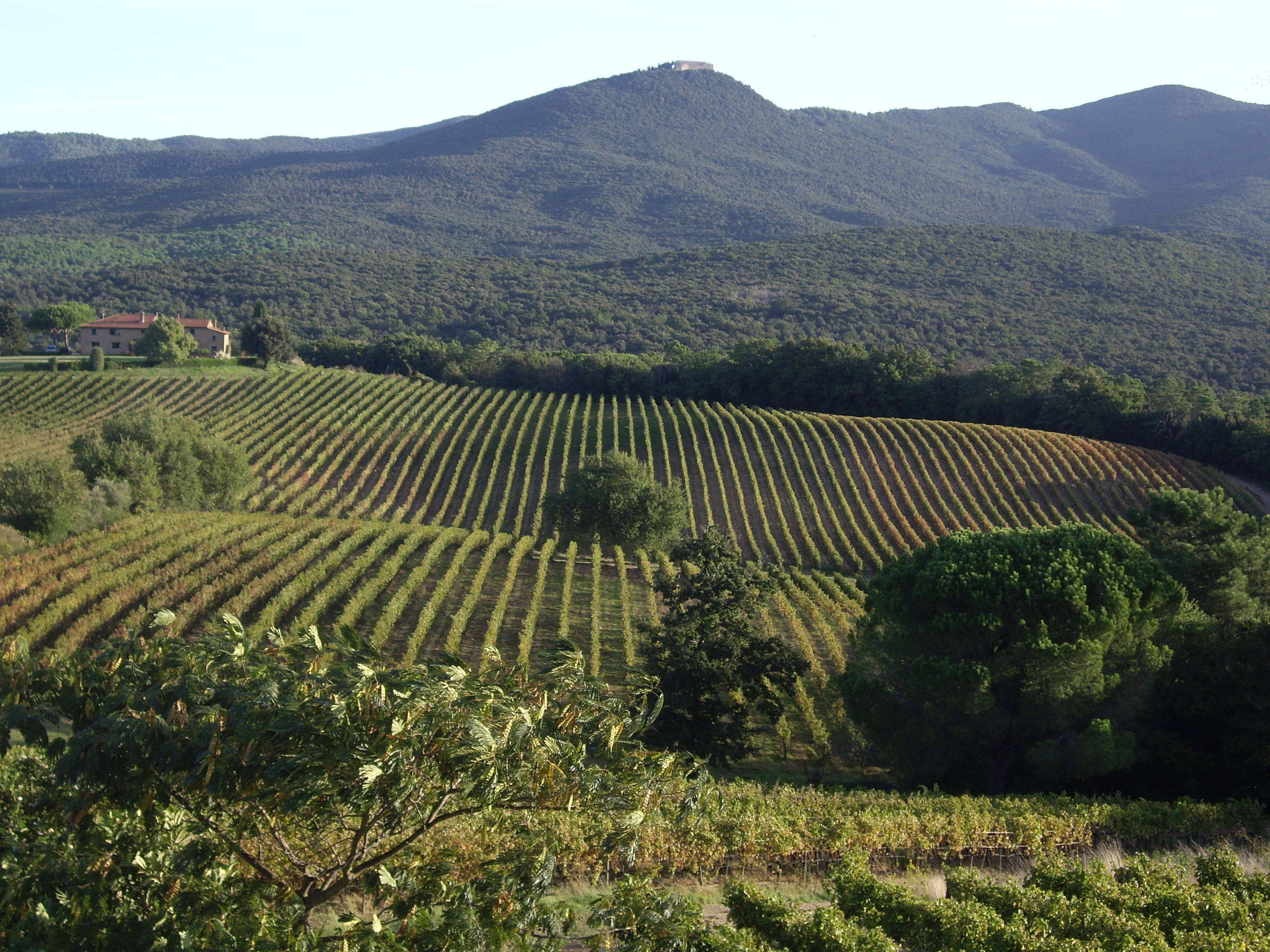 Landscape of vineyards with mountains behind