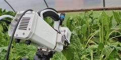 White Licor machine angled into sugar beet leaves