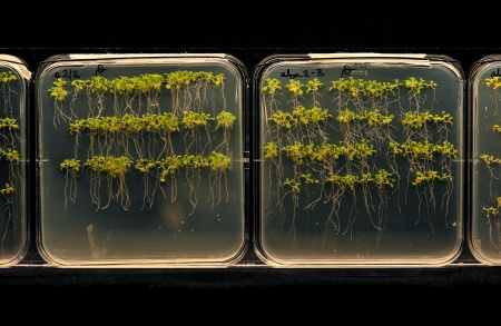 plant roots on glass plates