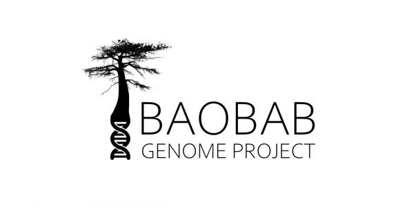 Baobab Genome Project logo