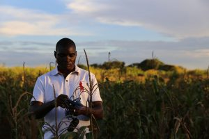 Hastings Manase, the farm manager from LUANAR, examines maize crops at Chitedze