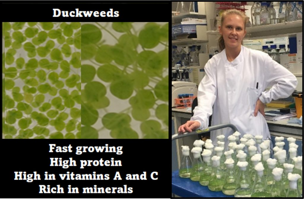 A researcher stands in a white coat, with a trolley full of duckweeds in jars
