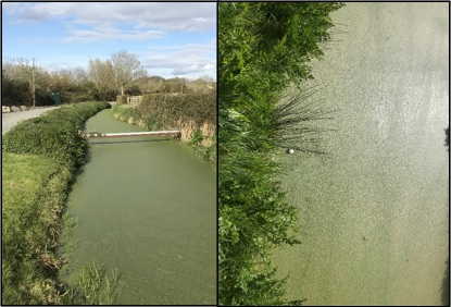 A course of water covered in duckweeds