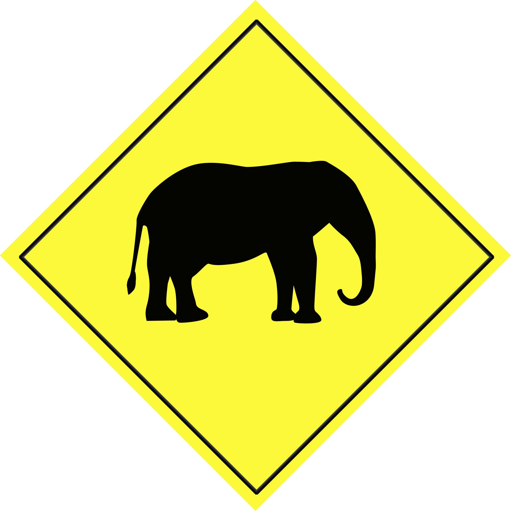 Shooting Elephants On The International Branch Campus II