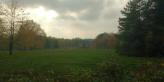 An image of university park campus and a 'natural' looking landscape