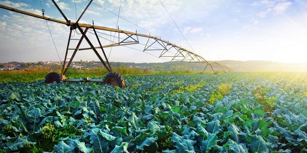 A crop field