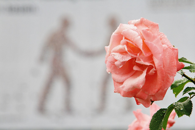 Rose and Peace, Andreas Perhab