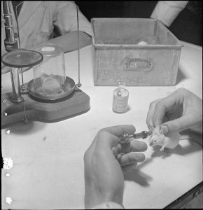 Scientist inoculates a mouse with penicillin as part of a research programme to determine how the drug can be used in humans (England, 1943). (Wikimedia commons)