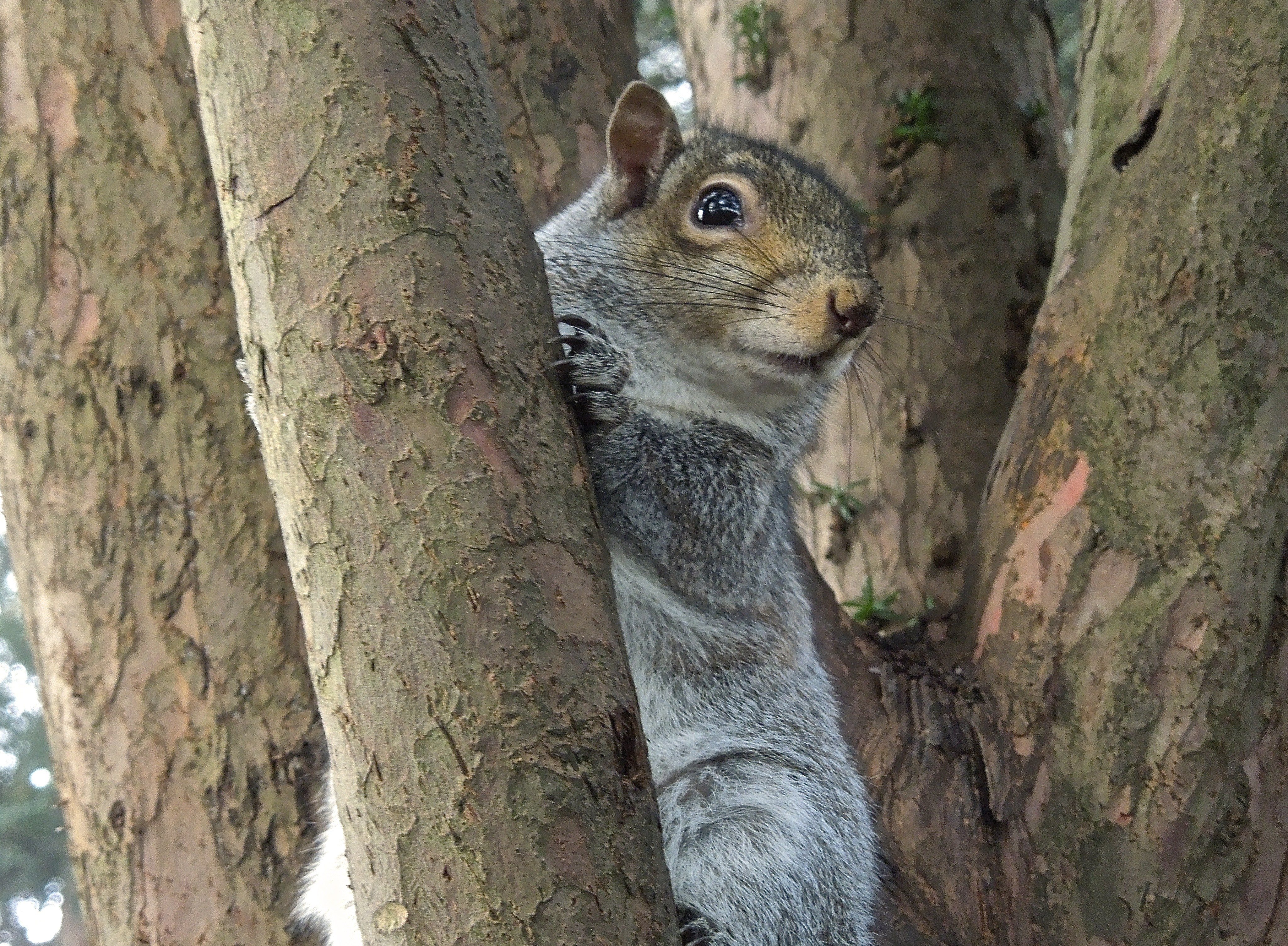 University squirrel. Photo taken by Brigitte at the beginning of the year.