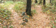 Two_Paths_Diverged_in_a_wood