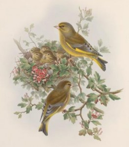 Illustration of two adult birds perched on tree branches next to a nest of  their