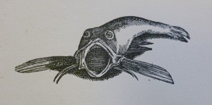 Engraving of a fish with a wide open mouth