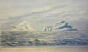ms57 iceberg