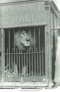 Wallace the 'Untamable' Lion was a perfectly acceptable entertainment in the 1890s (Iliffe & Baguley, 'Victorian Nottingham, Volume 4', EMC Oversize Not3.D28 ILI)