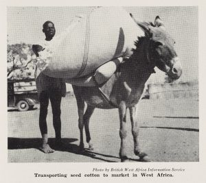 Man loading a bale of cotton seed onto a donkey in Africa