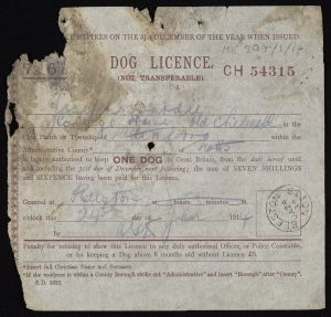 Very torn and stained printed dog licence