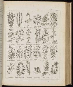 Twenty small drawings of plants