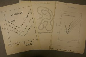 Pages from a research file relating to the enzyme lysozyme; 1980
