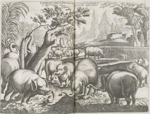 Illustration of a herd of elephants in a woodland, grazing and drinking