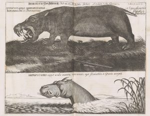 Two illustration of a hippopotamus, one on land roaring and showing teeth, the other with all but the head submerged in a river. The proportions of both are strange.